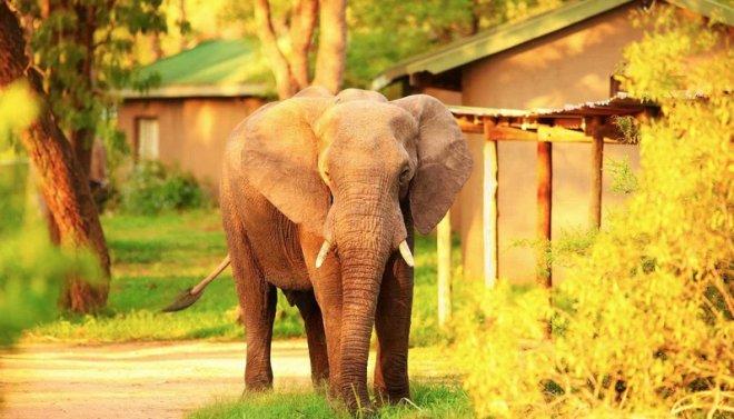 guney-afrika'da-safari-deneyimi.png