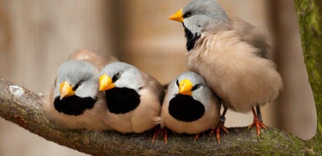 İspinoz Kuşlarının Kafesleri Nasıl Olmalı?