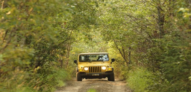 jeep-safari-.jpg