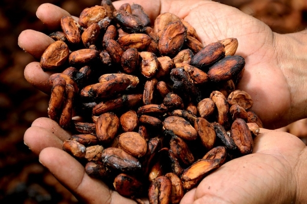 kakao-cekirdegi-kabugu.jpg