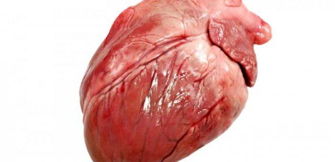 kalp kası