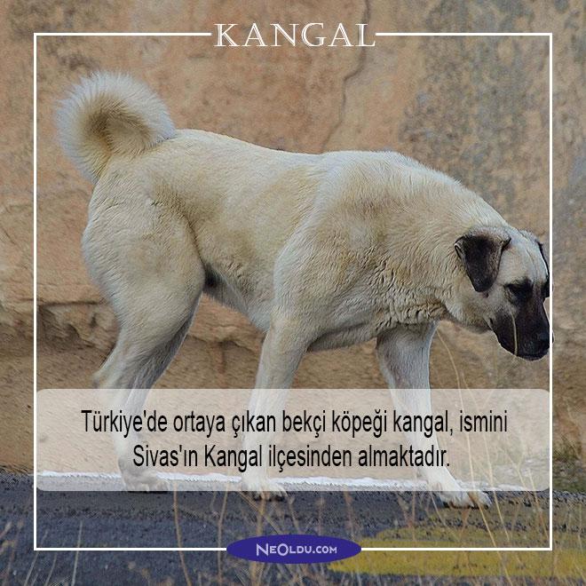en tehlikeli köpek cinsleri