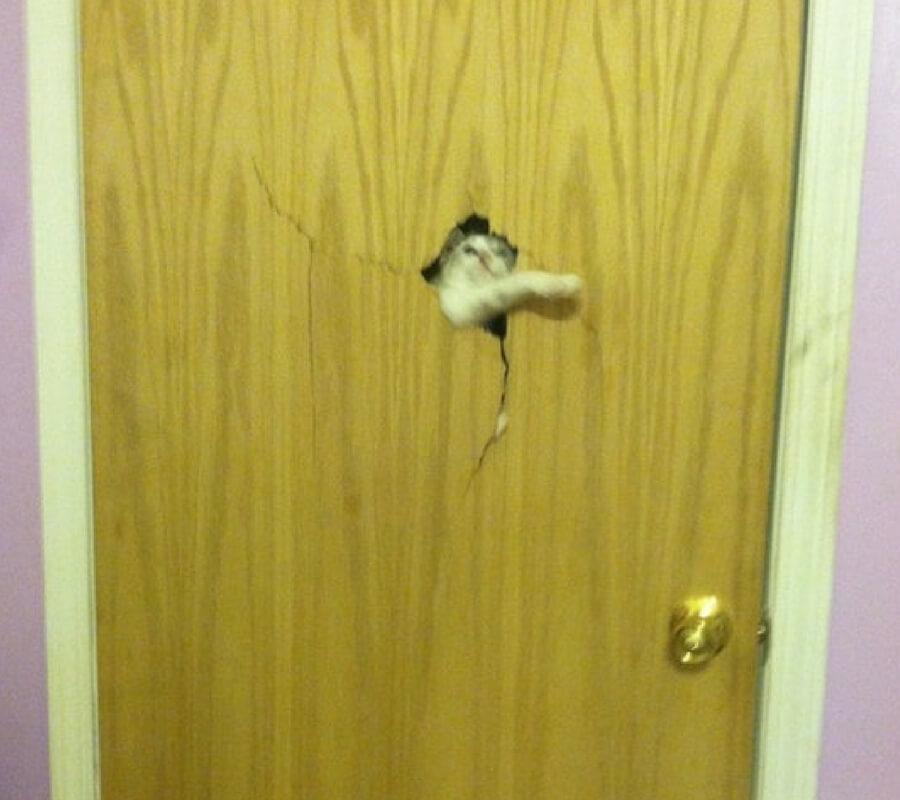 kapıya delik açan kedi