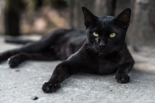 kara-kedi.jpg