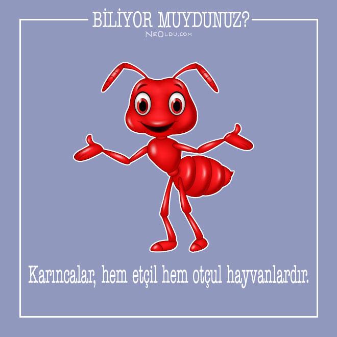 Karıncalar Hakkında Bilgi