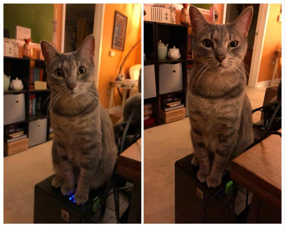 masum ve sevimli kedi