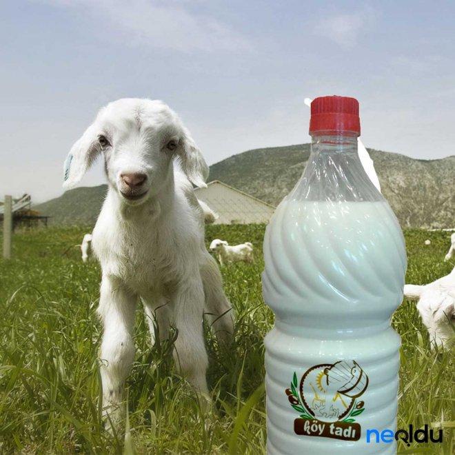 keçi-sütü-ne-i̇şe-yarar.jpg