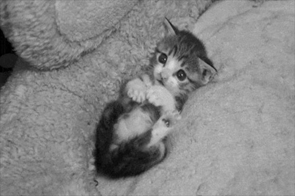 kedi-(2).jpg