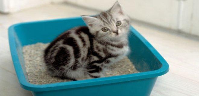 Kedilerde Görülen Üriner Sistem Hastalıkları