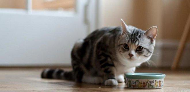 Kedilerin Beslenmesinde Dikkat Edilmesi Gerekenler