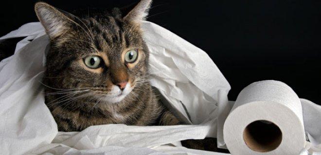 Kedi Eğitiminde Psikolojik Etkenler