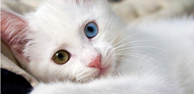 Kedilerin Sağlığı