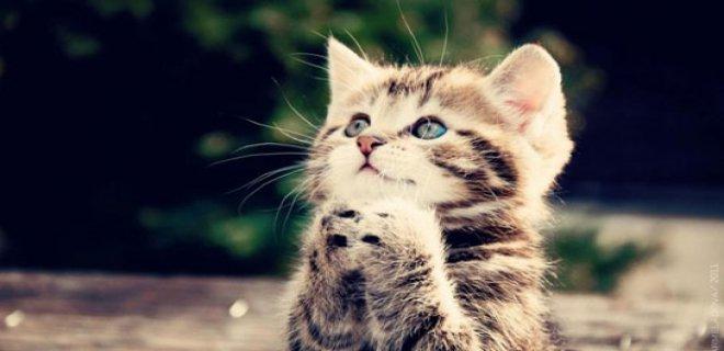 Kedilerde Yapılması Gereken Aşılar