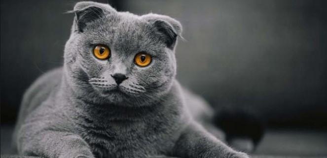 kedi-cinsleri-ve-ozellikleri-003.jpg