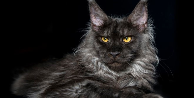 kedi-cinsleri-ve-ozellikleri-005.jpg