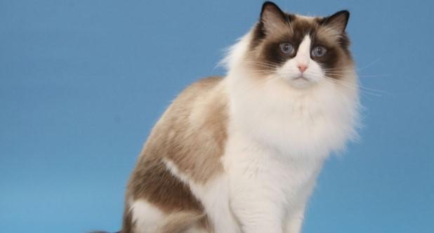 kedi-cinsleri-ve-ozellikleri-006.jpg