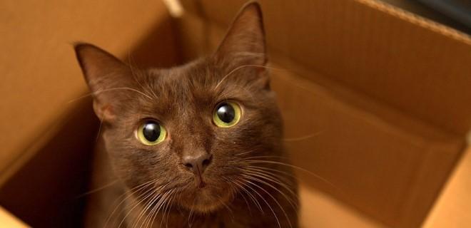 kedi-cinsleri-ve-ozellikleri-039.jpg