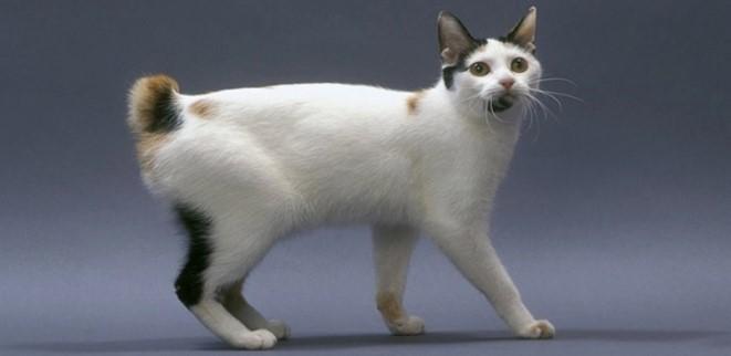 kedi-cinsleri-ve-ozellikleri-041.jpg