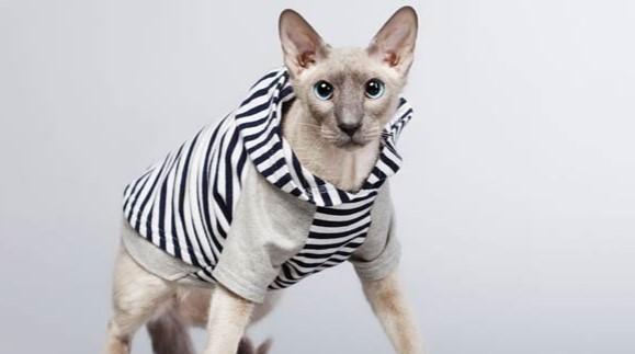 kedi-cinsleri-ve-ozellikleri-048.jpg
