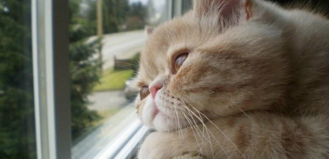 kedi-depresyonu.jpg