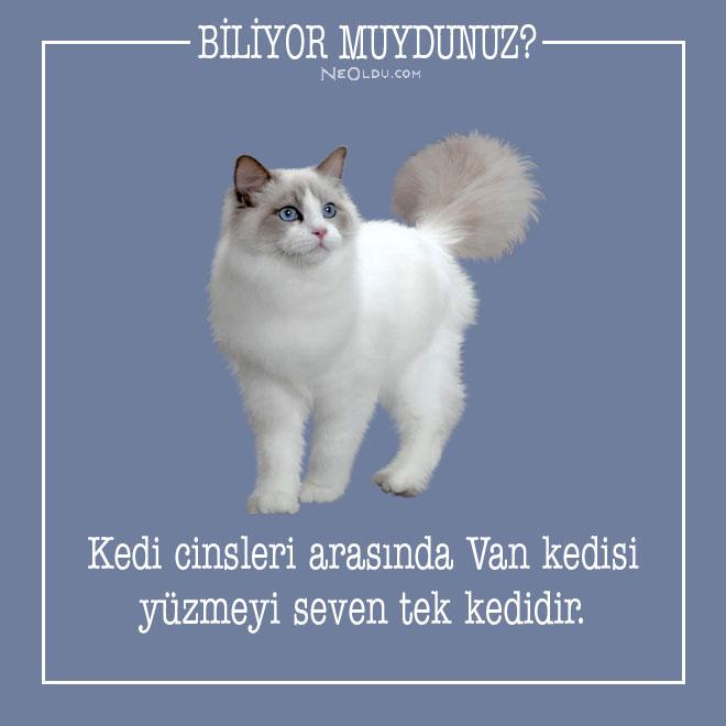 kedi-hakkinda-bilgi-1-001.jpg
