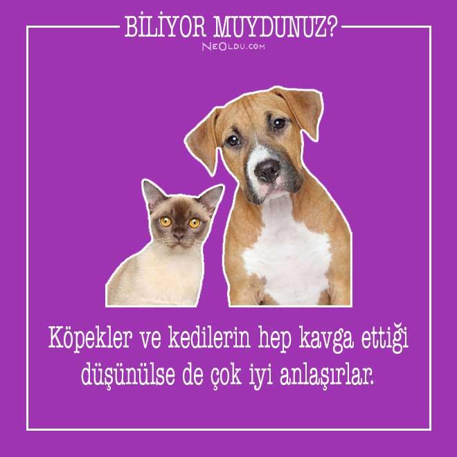 kedi-hakkinda-bilgi-1.jpg