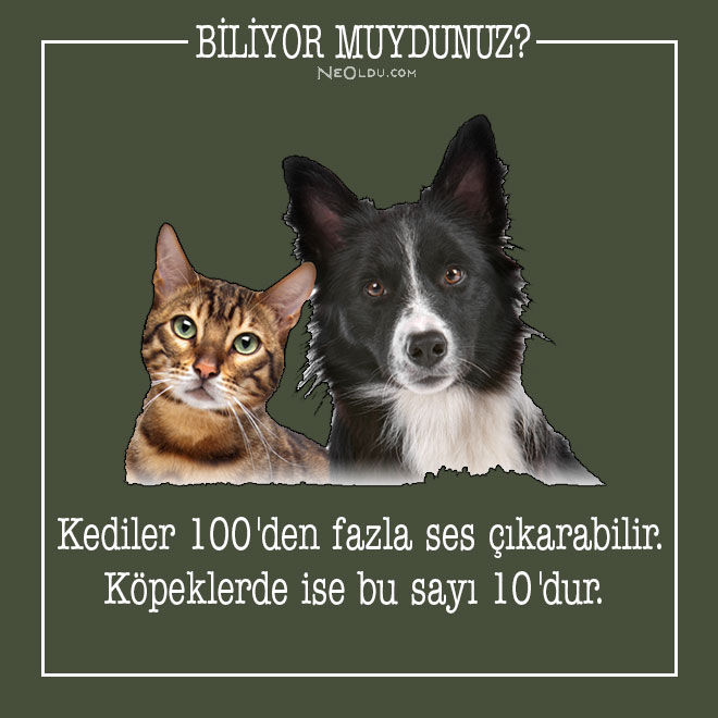 kedi-hakkinda-bilgi-11.jpg