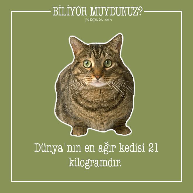 kedi-hakkinda-bilgi-12.jpg