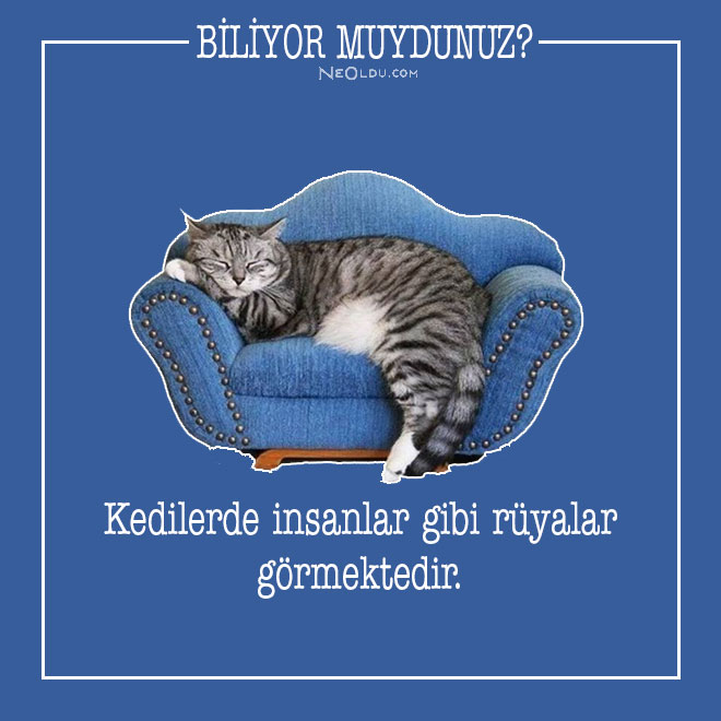 kedi-hakkinda-bilgi-13.jpg