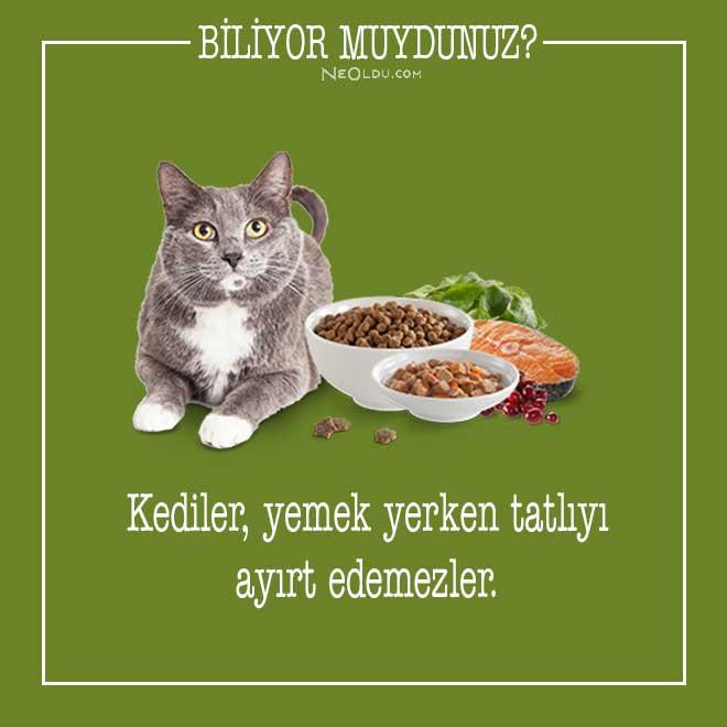 kedi-hakkinda-bilgi-2.jpg