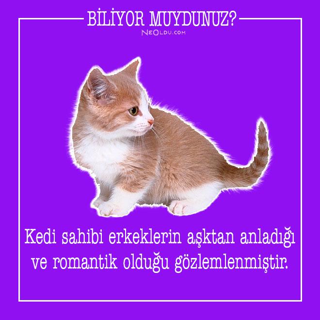 kedi-hakkinda-bilgi-21.jpg