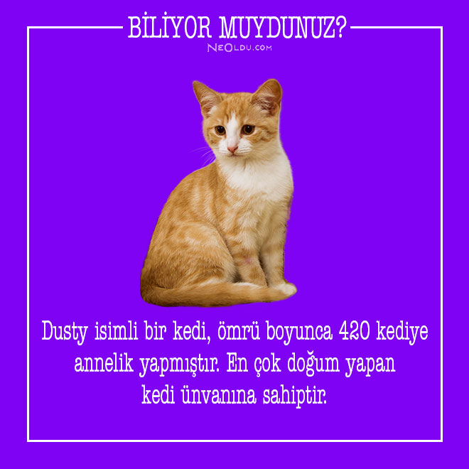 kedi-hakkinda-bilgi-3.jpg