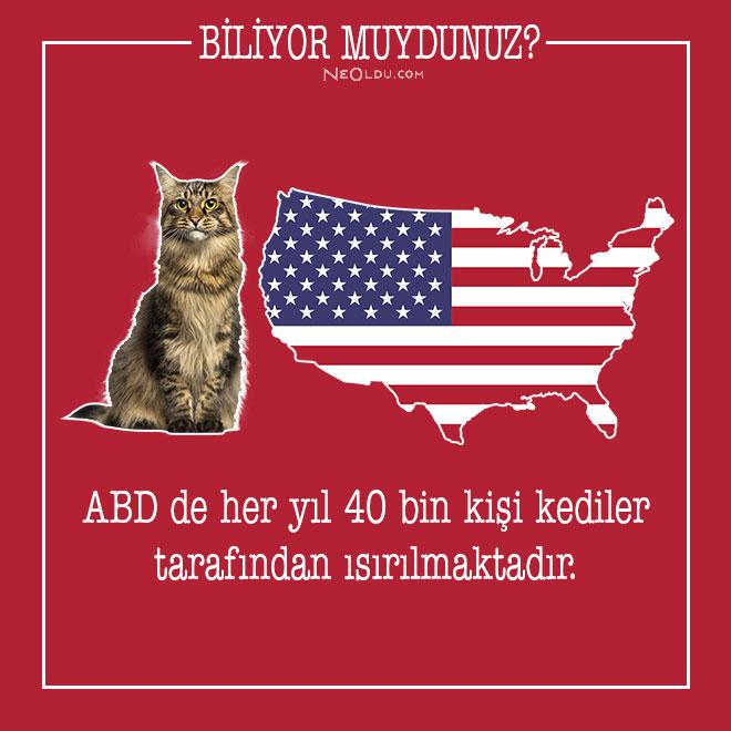 kedi-hakkinda-bilgi-6-001.jpg