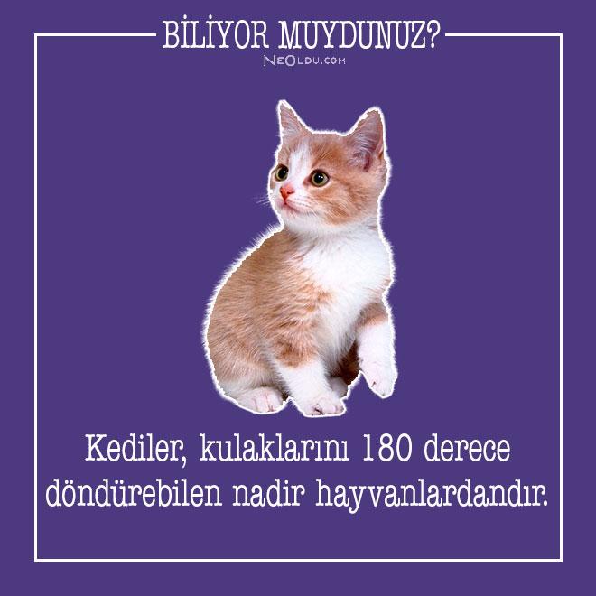 kedi-hakkinda-bilgi-9.jpg