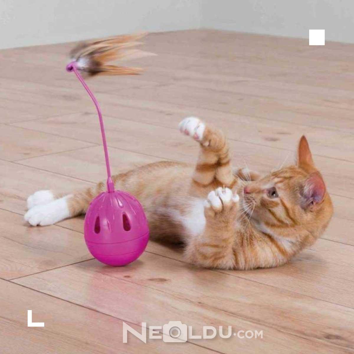 Kedi zeka oyuncağı