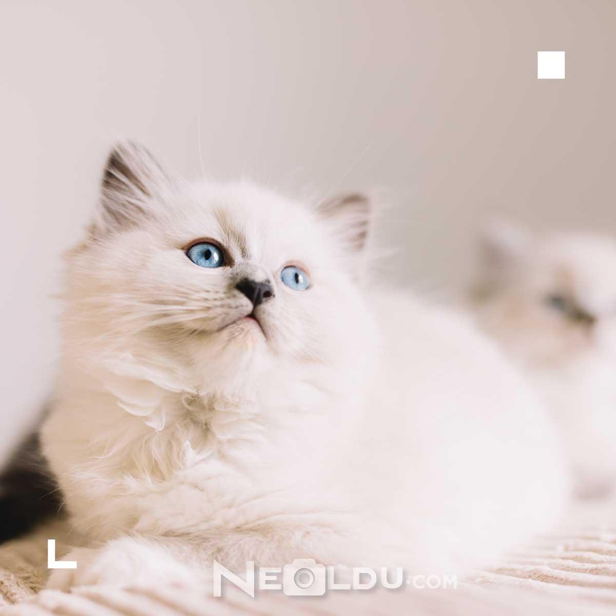 Kediler Ne Yer ve Ne Yememeli