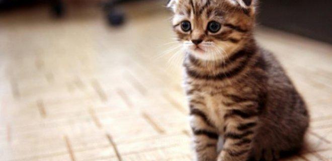 kedilerin-uzak-tutulmasini-saglar.jpg