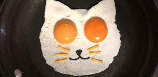 kedili-sahanda-yumurta.jpg