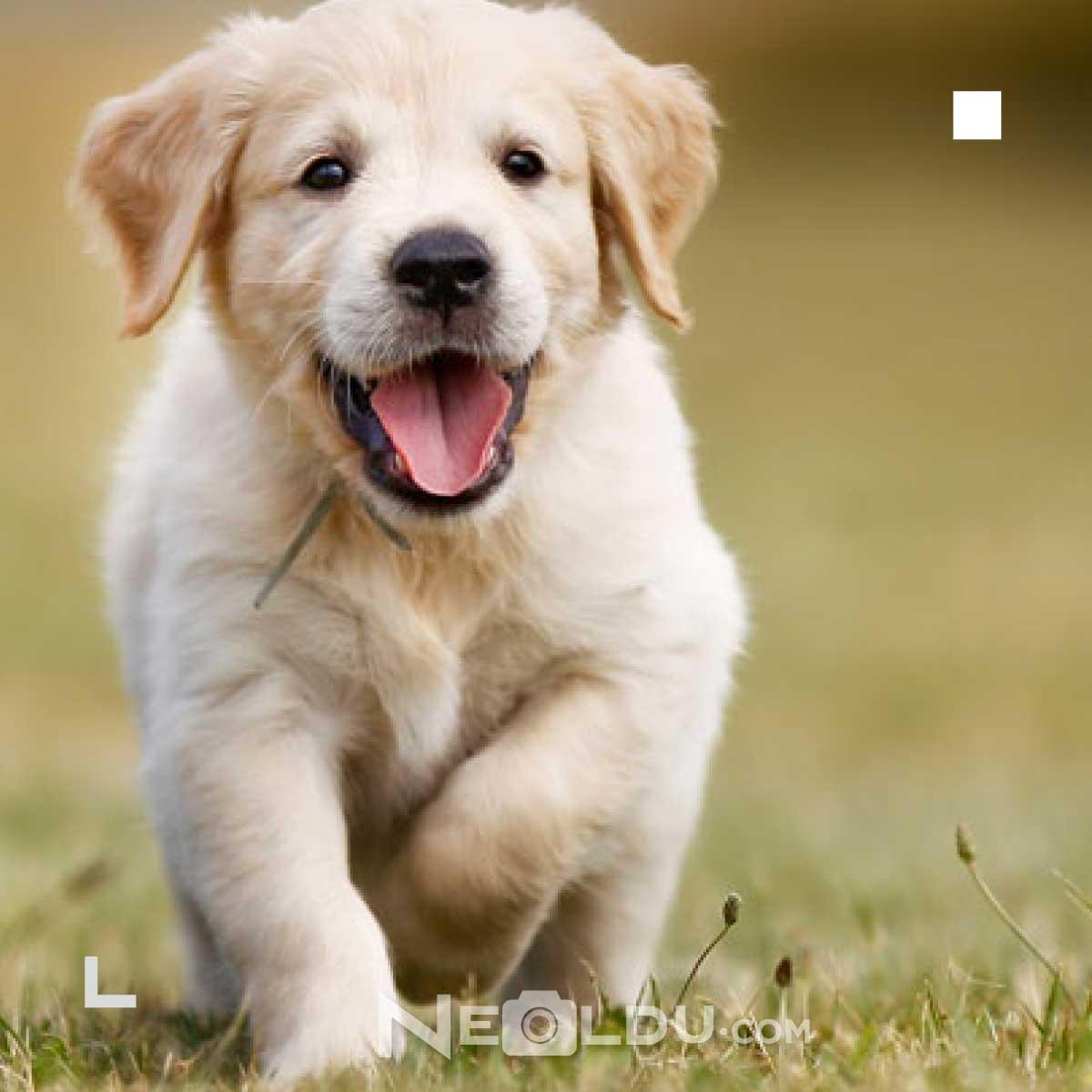 Eklem Hassasiyeti Köpek Maması