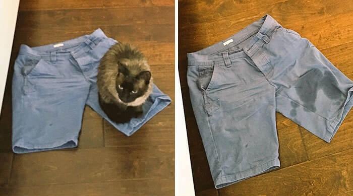 kıyafete yapan kedi