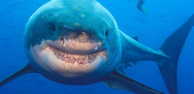 köpek balığı elektrik duyusu