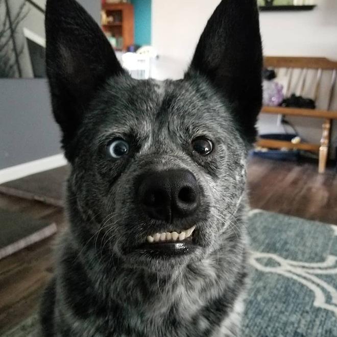 Köpek Moose