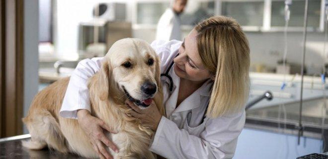 köpeklerde raşitizm tedavisi