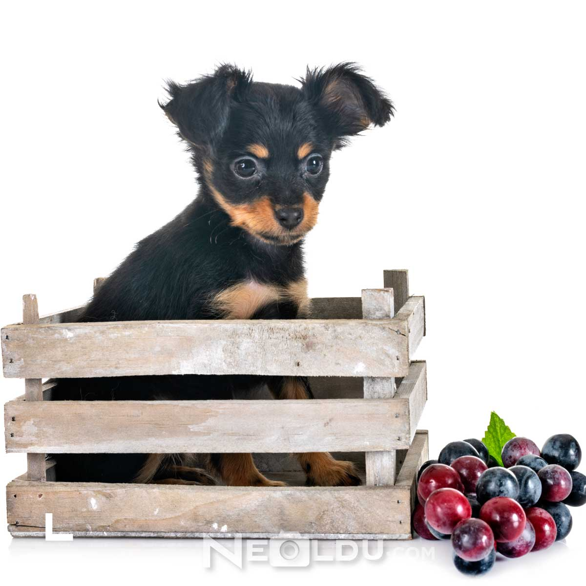 Köpeklerin yememesi gereken besinler