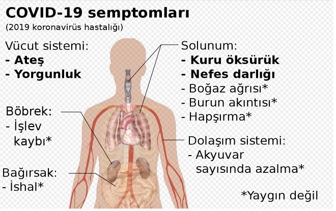 Enfeksiyon Belirtileri Nelerdir?