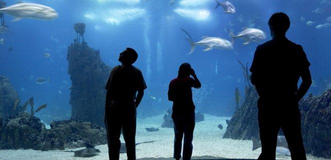 lizbon-okyanus-akvaryumu.jpg