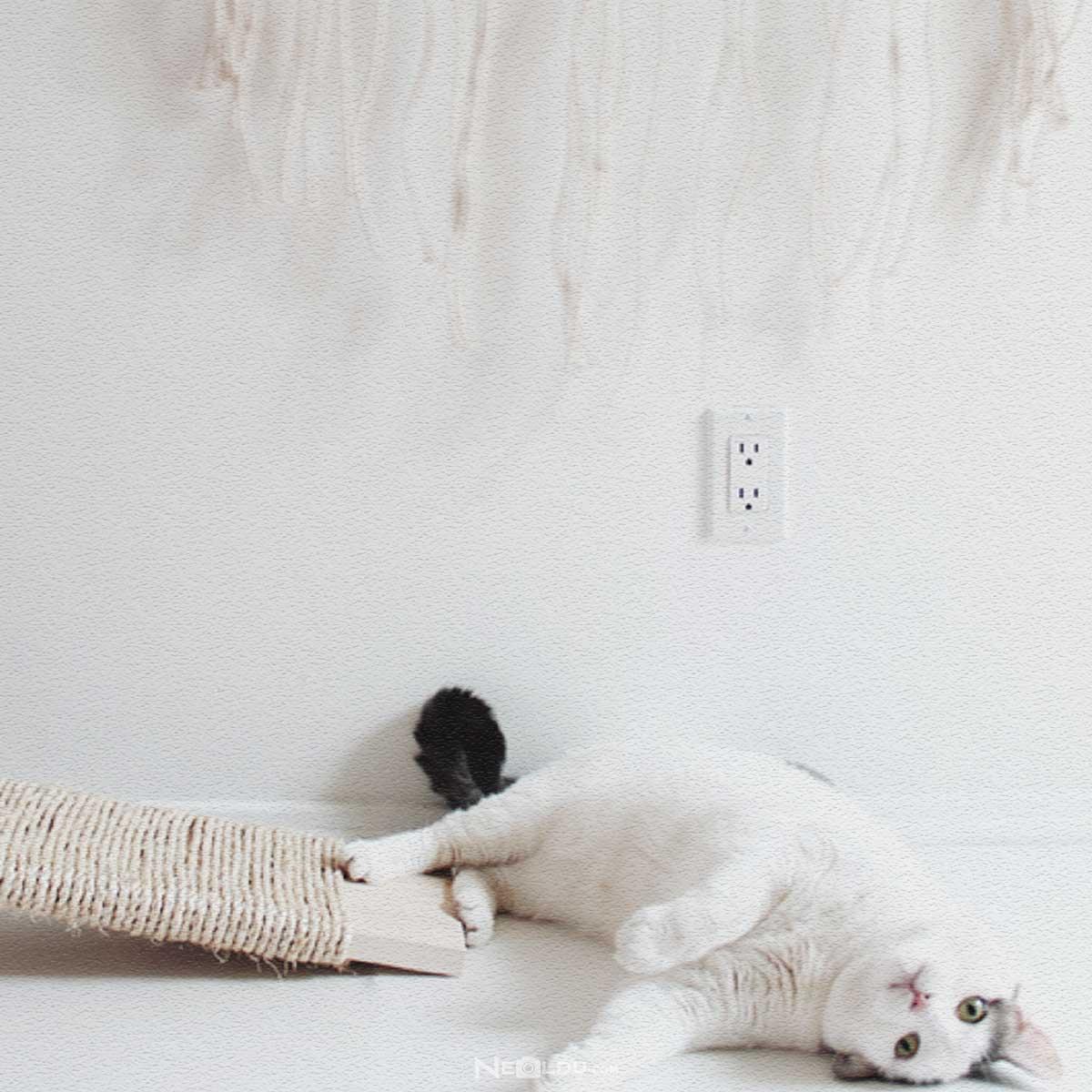 Kediler Neden Tırmalama Kullanmalı