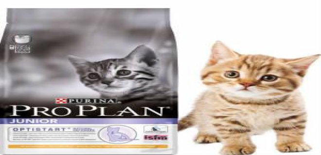Yavru Kedi Kuru Mamaları - Pro Plan