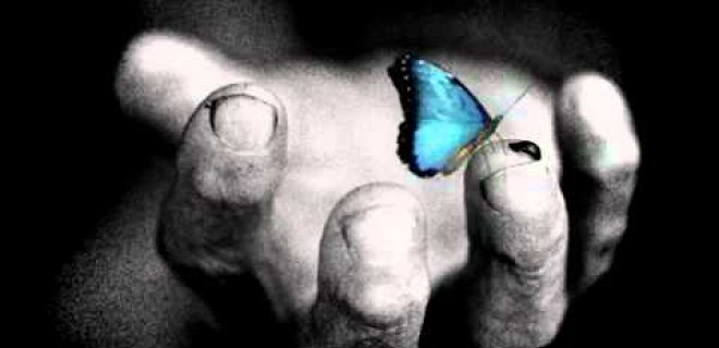 mavi-kelebek.jpg