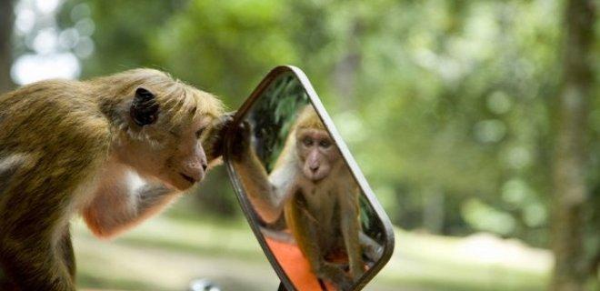 aynaya bakan maymun